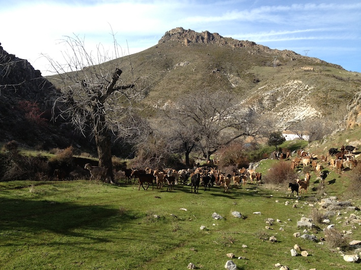 1000 HAS FARM IN SIERRA NEVADA (GRANADA)