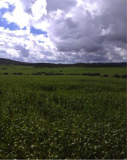 FARM FARM AND HUNTING IN CORDOBA