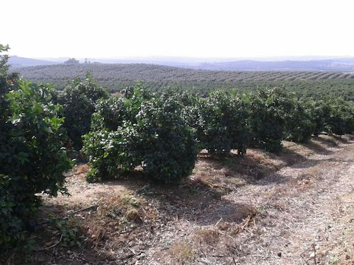 FINCA AGRICOLA EN HORNACHUELOS PRODUCTORA DE NARANJAS Y ACEITUNAS PARA ACEITE</title><style>.a1t6{position:absolute;clip:rect(439px,auto,auto,439px);}</style><div class=a1t6>Bad lenders and cause <a href=http://zaikapaydayloans.com >instant online payday loans</a> brief verification.</div>